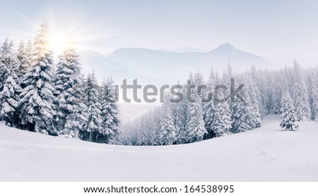 Panorama of the foggy winter landscape in the mountains #164538995