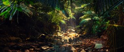 Panorama of the mountain river in the jungle, India, Goa