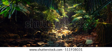 Panorama of the mountain river in the jungle, India, Goa #511938031