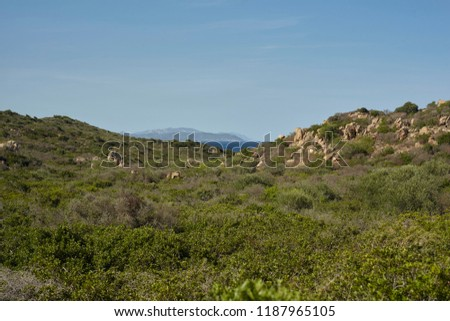 Panorama of the Sardinian coast with its typical vegetation and the Mediterranean vegetation that reaches the sea. #1187965105