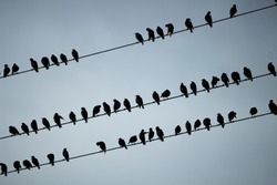 Panorama of the swallows on wire on background of the blue sky.