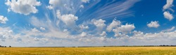 Panorama of the yellow wheat field with blue sky and some clouds.