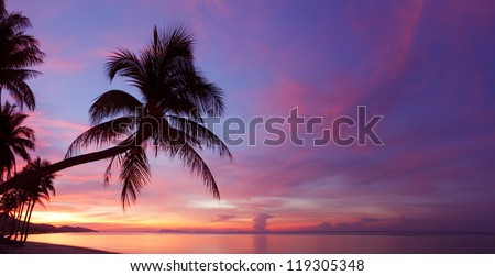Panorama of tropical sunset with palm tree silhouette at beach