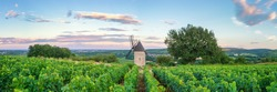 Panorama of Vineyard with Windmill - Santenay, France