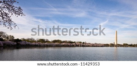 Panorama of Washington Monument with Cherry blossoms and Tidal Basin