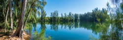 Panorama of Wolf Lake Park, with Australian pine trees (Casuarina equisetifolia) - Davie, Florida, USA