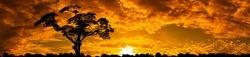 Panorama orange sky with Silhouette tree at sunset.