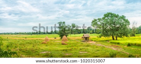 Panorama, rural scenery, Southeast Asian country with fields, cottages, buffalo Is the main element. #1020315007