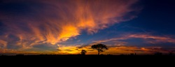 Panorama silhouette tree in africa with sunset.Dark tree on open field dramatic sunrise.Beautiful colorful clouds sky.