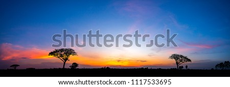 Panorama silhouette tree in africa with sunset.Tree silhouetted against a setting sun.