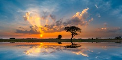 Panorama silhouette tree in asia with sunset.Tree silhouetted against a setting sun.Dark tree on open field dramatic sunrise and reflection in water.