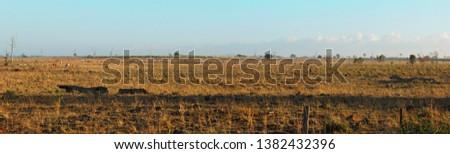 Panorama view of farmland in the Bundaberg region of Queenaland, Australia.