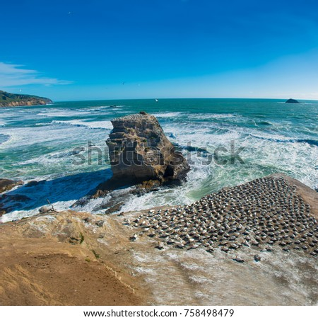 Panorama view of Muriwai Beach #758498479