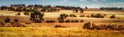 Panorama view of wheat paddocks Western Australia