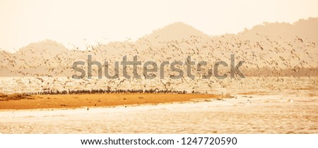 Panorama view, waders or shorebirds migration at sunset, flocks of shorebirds flying over sandy in the sea, beautiful glittering seawater. Warm tone. Winter season. Libong Island, Trang, Thailand. - Shutterstock ID 1247720590