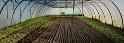 Panorama, wide angle of a greenhouse from the inside with lots of small vegetables and free space for banners, sliders or headers