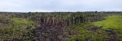 Panoramic aerial view of burn meadow,cut trees in cattle pasture farm in the Amazon rainforest, Brazil. Concept of ecology, conservation, deforestation, agriculture, global warming and environment.