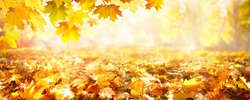 Panoramic beautiful autumn nature background with carpet of orange and yellow fallen maple leaves in sunlight. Autumn landscape with blurry defocused park in background. Ultra wide banner format.