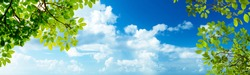 panoramic cloudy sky view and green leaves