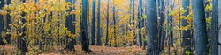 Panoramic forest autumn landscape with colorful leaves and trees