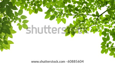 panoramic Green leaves on white background #60885604
