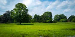 Panoramic Green Prairie with Forest. Dramatic Clouds over the Peaceful Meadow with Tall Mature Trees. Nature Trail Trip Image with Space for Text.