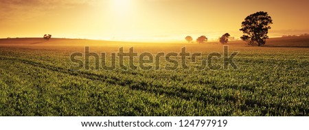 Panoramic image of a Clare Valley sunrise, Australia #124797919