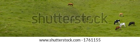 Panoramic image of a small herd of dairy cows, grazing on a Swiss hillside. Space for text on the grass.