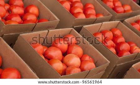 panoramic image of boxes of tomatoes at a local Farmer's Market ready for purchase.