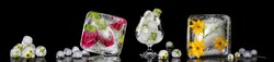 Panoramic image with flowers frozen in ice cubes. Isolate on black background