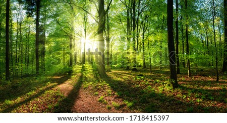 Panoramic landscape: beautiful rays of sunlight shining through the vibrant lush green foliage and creating a dynamic scenery of light and shadow in a forest clearing 商業照片 ©
