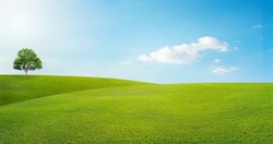 panoramic landscape, lonely tree among green fields, blue sky and white clouds in the background