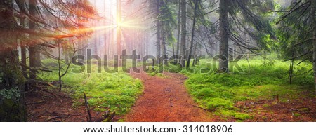 Stock Photo Panoramic landscape of an autumn fir forest in the rain at dawn. Deserted footpath goes into the misty distance, dew hanging on every twig and grass, melancholy and serenity in the air
