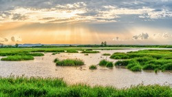 Panoramic landscape scenery background of marsh wetland full of grass with heron looking for fish during sunset at Thalaynoi, Phatthalung, Thailand