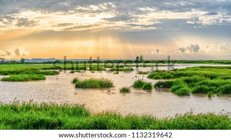 Panoramic landscape scenery background of marsh wetland full of grass with heron looking for fish during sunset at Thalaynoi, Phatthalung, Thailand Foto d'archivio ©