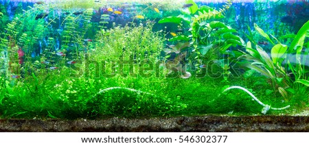 Panoramic large aquarium on a white background