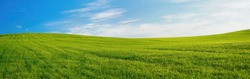 Panoramic natural landscape with green grass field and blue sky with clouds with curved horizon line. Panorama summer spring meadow.
