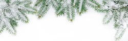 Panoramic Nature Winter background with snowy fir tree branches. Fir branches covered with snow on a white background, top view. Wide Angle Winter Christmas Web banner With Copy Space