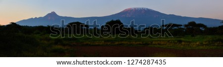 Panoramic photo of stratovolcano Mount Kilimanjaro and Mawenzi peak, snow capped highest african mountain, lit by early morning sun against  colorful sky. Savanna view, Amboseli national park, Kenya. #1274287435