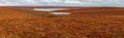 Panoramic photo of the tundra in the fall in Canada's Northwest Territories near Tuktoyaktuk.
