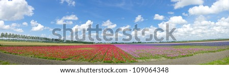 panoramic shot of a field with blooming flowers