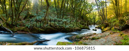 Panoramic shot of the River Fowey and woods at Golitha Falls Cornwall England UK