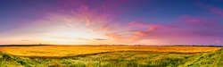 Panoramic sunrise over a Dakota Wheat field with blue and Magenta sky green grass and golden wheat