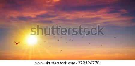 Panoramic sunset. Birds flight in a high resolution summer sun background #272196770