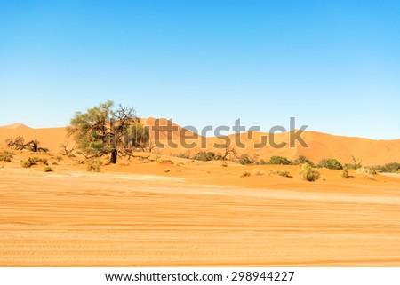 Panoramic view at sand dune in the Namibian Desert near Sossusvlei
