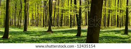 Panoramic view of a green forest at spring time - stock photo