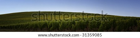 Panoramic view of a vineyard in Burgundy, France