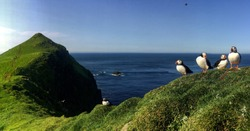 Panoramic view of beautiful landscape in Mykines, with focus on a puffins family, Faroe Islands