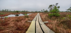 Panoramic view of bog with wooden path, small ponds and pine trees. Hiking trail with wooden walkway that goes across the swamp.