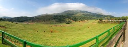 Panoramic view of elephants in Cabarceno Natural Park, Cantabria - Spain